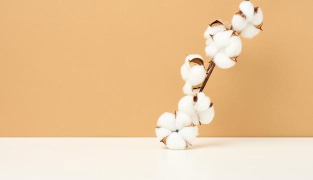 Fiore di cotone su fondo di carta beige pastello, sovraccarico. minimalismo, sfondo per mostrare qualsiasi prodotto, copia spazio