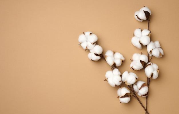 Fiore di cotone su fondo di carta beige pastello, sovraccarico. composizione piatta minimalista, copia spazio