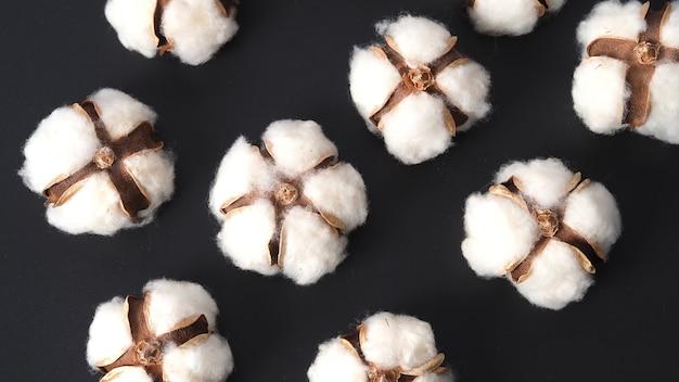 Fiori di cotone isolati su sfondo nero studio shot flat top view angolo di cotone bianco flowe