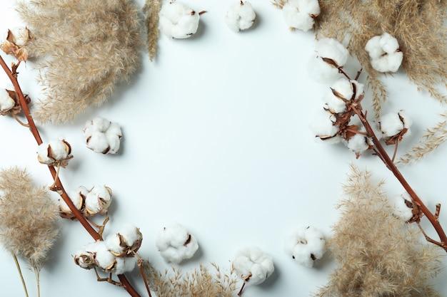 Rami e canne della pianta del cotone su bianco