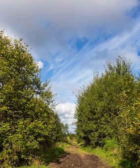 Paesaggio di campagna con una strada e alberi intorno. copia spazio. bellissimo sfondo della natura.