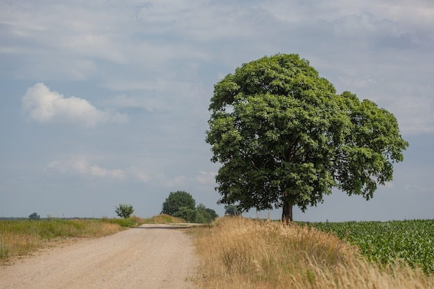 Strada di campagna tra un campo e un prato. all'orizzonte c'è un albero solitario. il cielo è leggermente coperto. c'è molto spazio per le copie