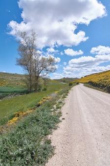Strada di campagna tra campi di fiori gialli