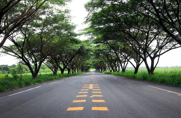 Strada di campagna verso la natura con un albero gigante accanto alla strada