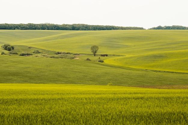 Paesaggio agricolo di campagna Foto Premium