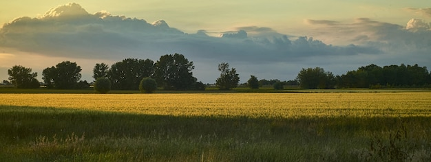 Dettaglio del paesaggio di campagna, immagine banner con spazio di copia