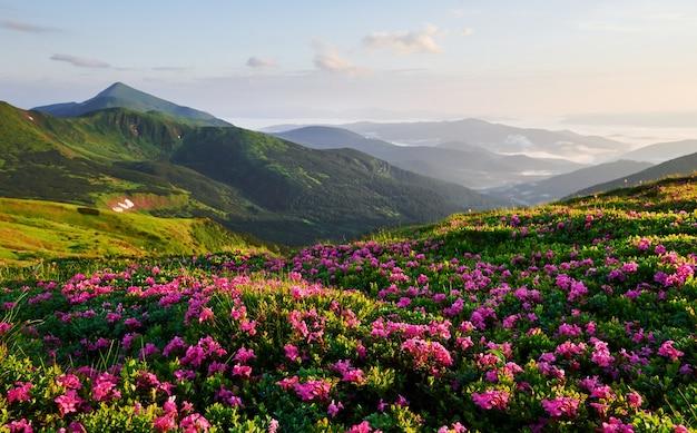 In campagna. maestose montagne dei carpazi. bel paesaggio. vista mozzafiato.