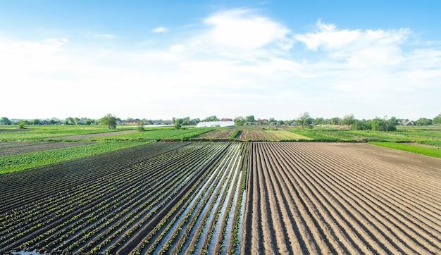 Vista della campagna di un campo semipiantato con melanzane sistema di irrigazione del pozzo coltivazione di cibo