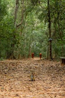 Una coppia di monaci buddisti cammina nella giungla godendosi il silenzio e la solitudine.