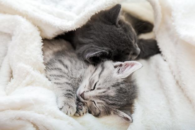 Coppia simpatici gattini tabby che dormono su una coperta morbida bianca. i gatti riposano sonnecchiando sul letto. amore felino e amicizia il giorno di san valentino. gli animali domestici comodi dormono in una casa accogliente.