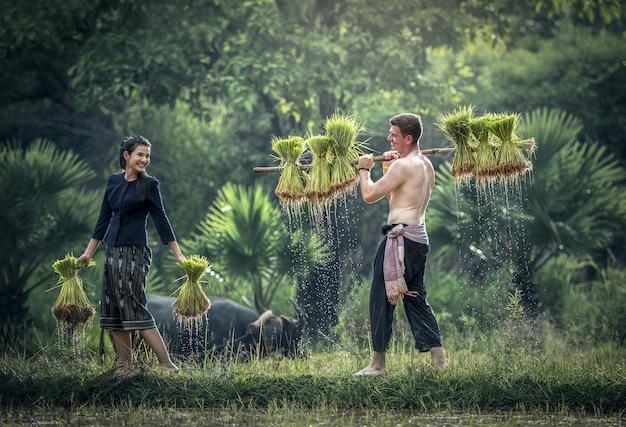 Coppia di contadini in tailandia; coltivano riso nella stagione delle piogge.