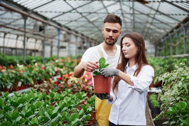Coppia di fioristi al lavoro. ragazza con vaso con pianta verde.