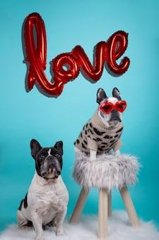 Coppie dei cani del bulldog francese nell'amore per il giorno di biglietti di s. valentino felice con il fondo gonfiabile del pallone rosso con la parola amore e vetri rossi del cuore