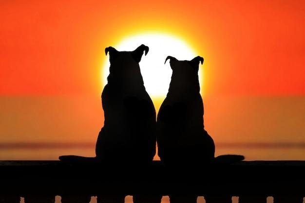Coppia di jack russell al tramonto