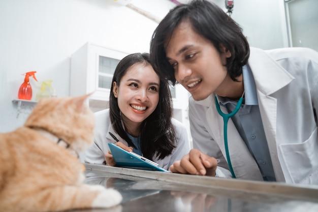 Coppia di veterinari osservando un gatto marrone in una clinica veterinaria
