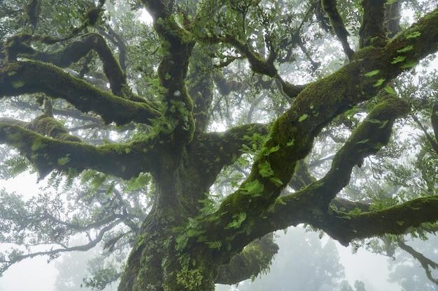 Coperto da un albero di muschio a madeira, in portogallo