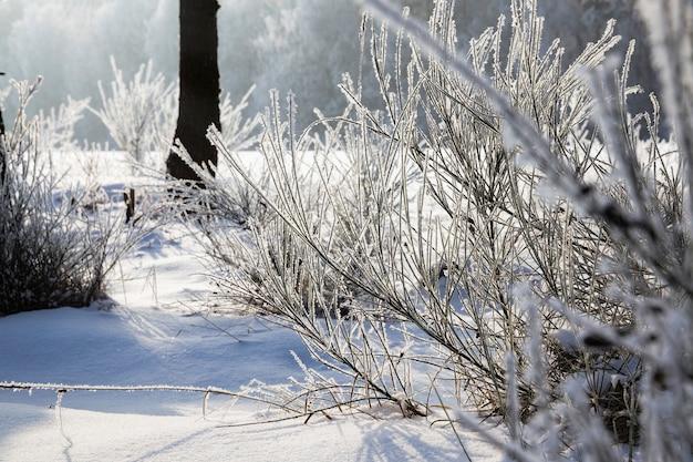 Coperto di soffice foresta di neve fresca bianca in inverno, paesaggio in condizioni di freddo gelido inverno nella soleggiata giornata luminosa