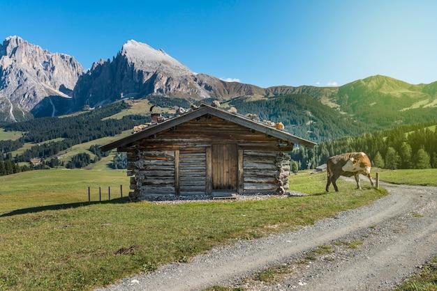 Mucca vicino a una casa in legno in campagna, casa in legno con una mucca