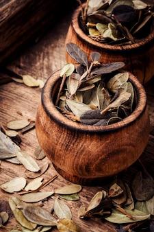 Foglia di mirtillo rosso medicina di erbe