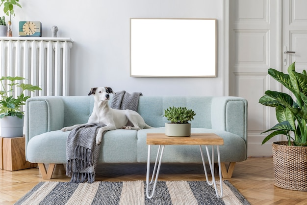 Accogliente composizione di interni eleganti del soggiorno con cornice per poster finto, divano, tappeto, cane, piante e altri accessori. modello.