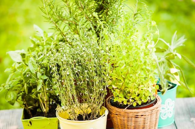 Accogliente giardino domestico con erbe aromatiche - rosmarino, salvia, basilico, timo e origano