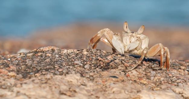 Spiaggia di sabbia di granchio