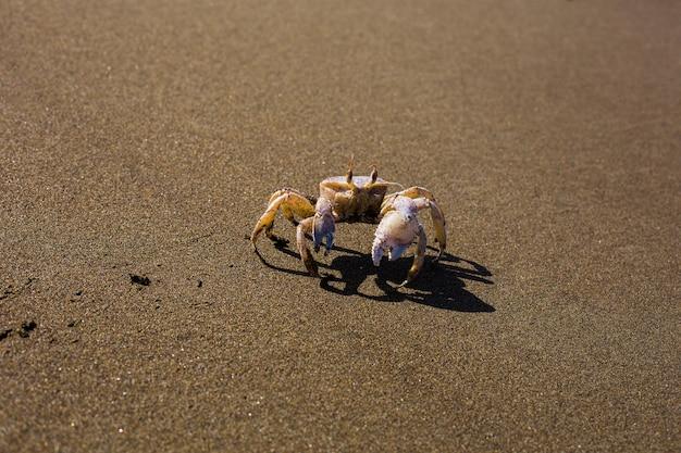 Primo piano del granchio che si intrufola sulla superficie di sabbia