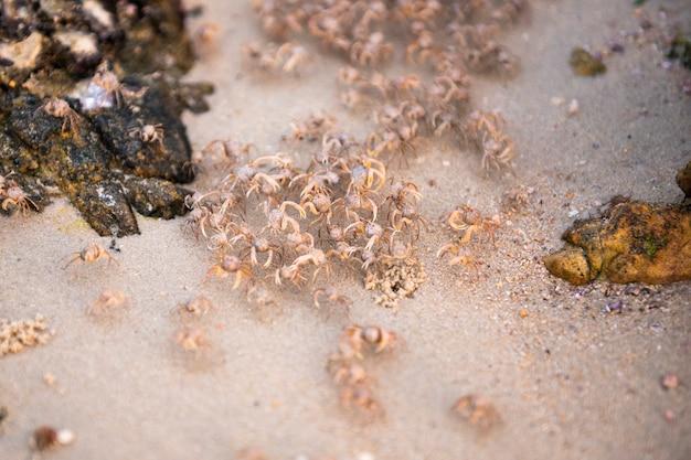 Granchi sulla spiaggia