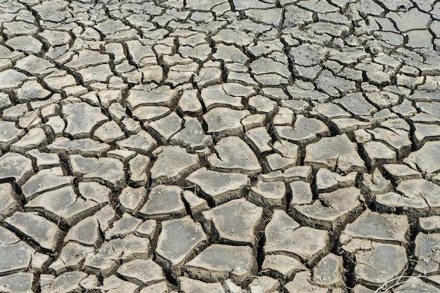 Terra secca incrinata nella zona arida