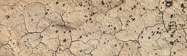 Terra secca incrinata nel deserto