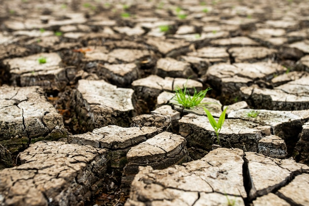 Terra secca incrinata senza acqua