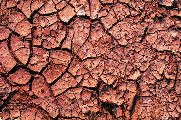 Terreno asciutto screpolato