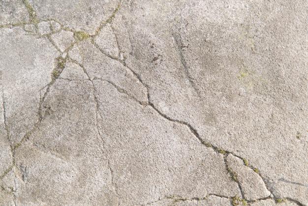 Crepe in un sentiero di cemento