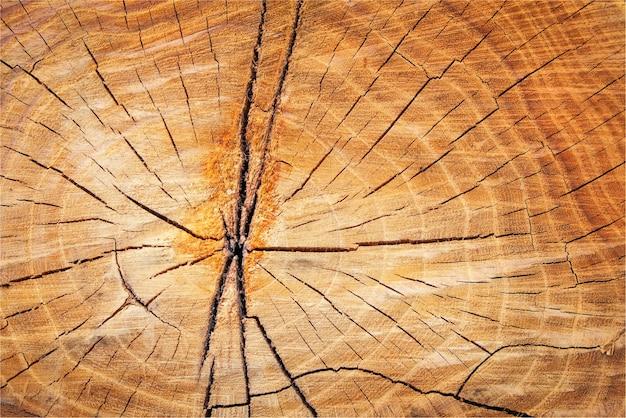 Crepe su un ceppo d'albero, struttura in legno