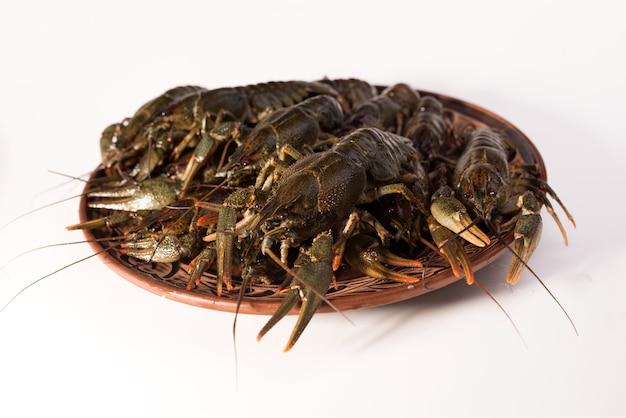 I gamberi vivono su un piatto isolato su uno sfondo bianco. gamberi crudi. spuntino a base di pesce fresco.