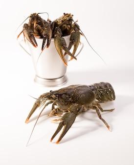 Gamberi vivi collocati in un secchio metallico isolato su uno sfondo bianco. gamberi crudi. spuntino a base di pesce fresco.