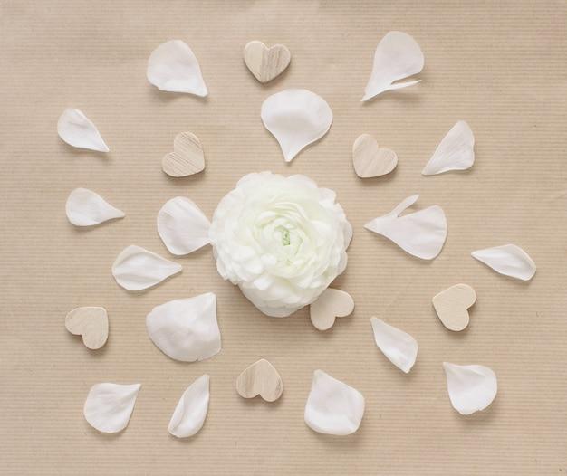 Fiore di ranuncolo crema in un cerchio di cuori e petali su vista dall'alto di carta beige