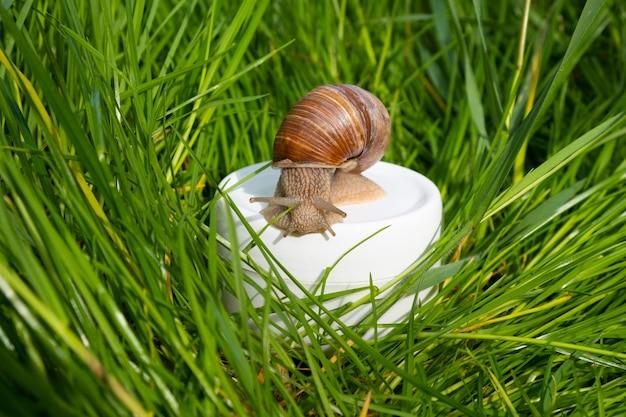 Crema con mucina di lumaca in erba verde, cura della pelle.