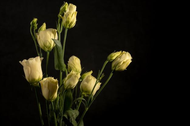 Eustoma cremosi. delicata composizione floreale su una parete nera. fotografia di basso profilo. copia spazio. sfocatura e messa a fuoco selettiva