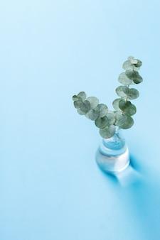Composizione creativa di giorno di autunno di autunno di inverno di natale con le foglie decorative dell'eucalipto. copia spazio, natura morta sfondo pastello blu per biglietto di auguri