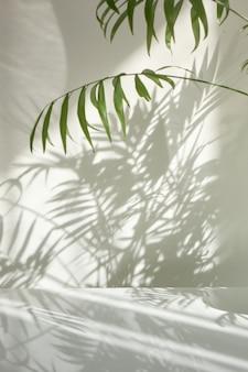 Composizione creativa da rami naturali della pianta di palma tropicale sempreverde con ombre decorative su una parete e una superficie chiare. gioco di ombre su un muro dalla finestra alla giornata di sole.