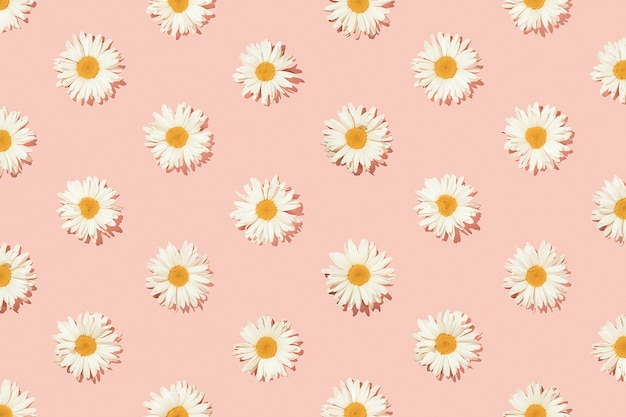 Motivo floreale creativo di fiori a margherita su sfondo rosa. vista dall'alto.