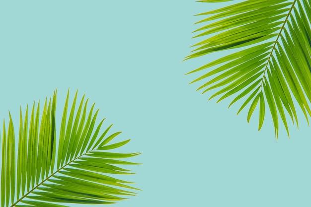 Creativo verde tropicale palm vista dall'alto piatto laici colore pastello sfondo