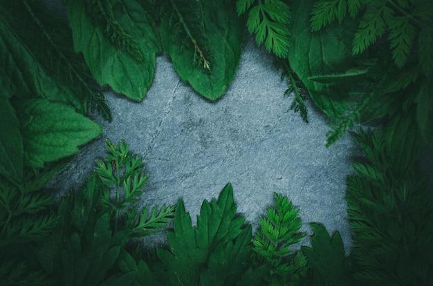 Disposizione creativa fatta dell'erba della foresta sullo scisto nero