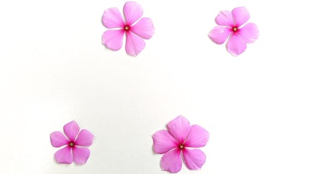 Layout creativo fatto di fiori viola su sfondo bianco concetto minimalista con spazio per copia gratuita