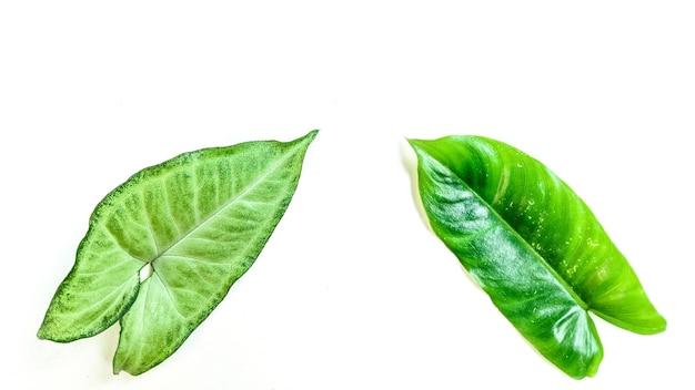Layout creativo fatto di foglie decorative tropicali su sfondo bianco
