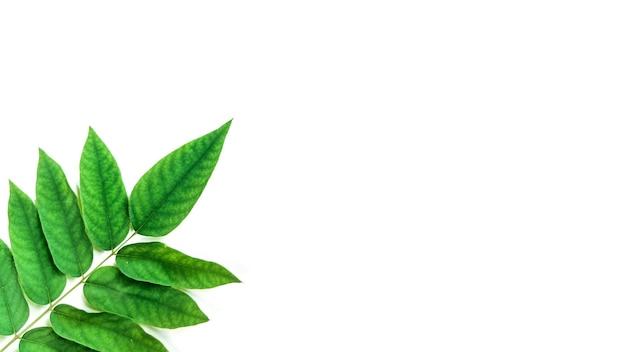 Layout creativo fatto di foglie tropicali su sfondo bianco concetto minimalista con spazio copia