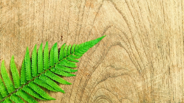 Layout creativo fatto di foglie tropicali su fondo in legno concetto minimalista con spazio copia