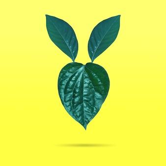 Disposizione minima creativa di congedo verde