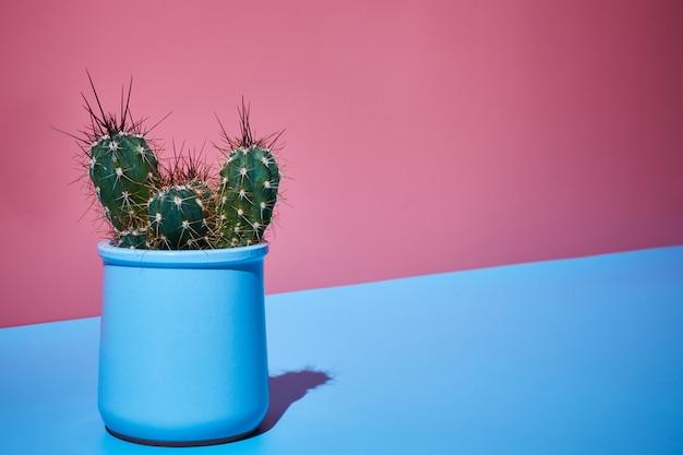 Colpo creativo cactus d'arte su uno sfondo rosa-blu luminoso bicolore al sole con ombre infantili. copia spazio.